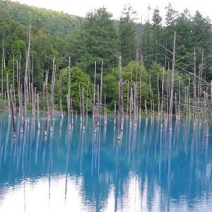 北海道・美瑛町 青い池と共にしろひげの滝も観光セットでどうぞ!