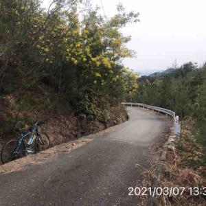 サイクリング 【林道】