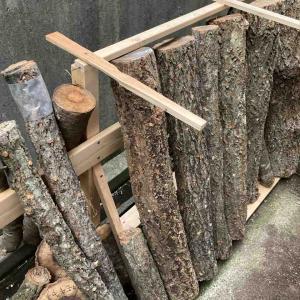原木きのこ栽培【本伏】