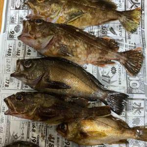 直島で夜釣り【大漁】