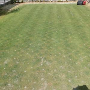 4月なのに寒かったけどやっと暖かくなってきたので芝刈りした