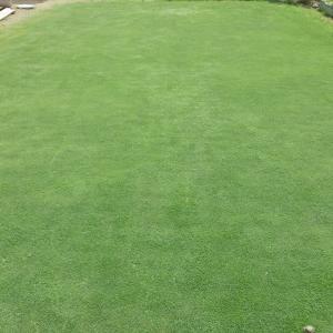 GW2日目 ベント芝の刈りこみ