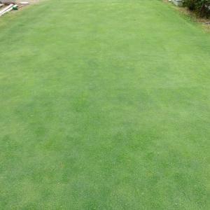 GW5日目 雨上がりで芝の調子が良くなってきたので中2日で芝刈り