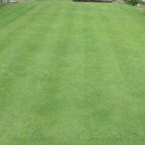 平日の芝刈り、植物成長調整剤「アルムグリーン」散布