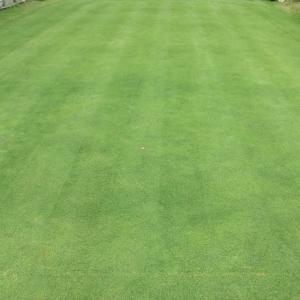 芝刈りと薄目砂散布