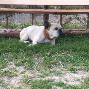 4月9日・犬の紫陽花中毒