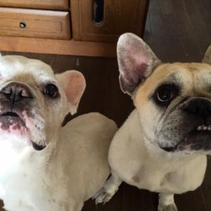 4月26日の日記・ペットロスと犬の愛情について