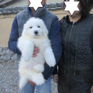 ロッキー君、岡山県に巣立って行きました。