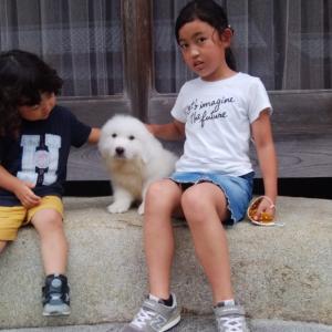 ジェシー君、愛知県へ巣立っていきました