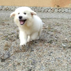 8月25日生子犬です。