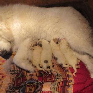 子犬が産まれました。