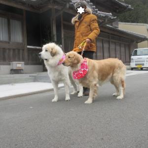 静岡県からベルちゃんのお里帰りです。