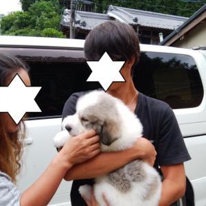 こむぎちゃん、埼玉県へ巣立って行きました。