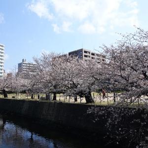 府内城址公園の桜情報
