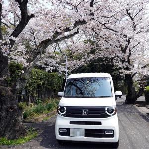 昨日もN-VANで桜めぐり