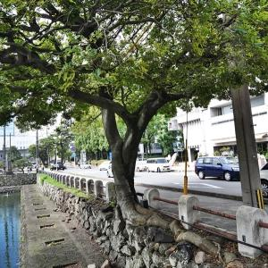 コブラツイストの樹 排水口