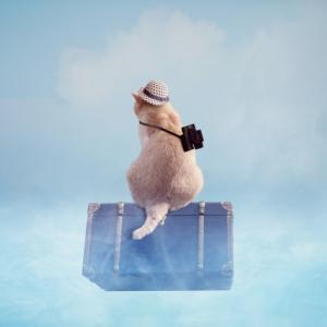 子供が乗れる(座れる)スーツケースは子供連れ家族旅行に超人気でおすすめ