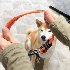 首輪のつけ外しを嫌がる我が家の柴犬、コンフォートフレックスのハーフチョークがベスト!