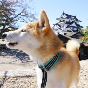 犬連れで入れる!愛犬と一緒に彦根城でお散歩