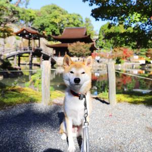 犬連れで紅葉の名所多治見市の永保寺へ