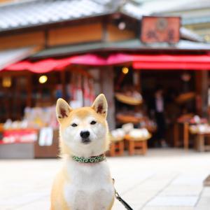 ペットを預けて参拝できる!犬連れで伊勢神宮とおかげ横丁へ