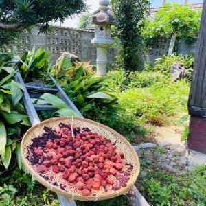 今年の梅は昨年より美味しい、はず