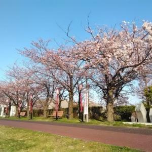桜でチャリ出撃!