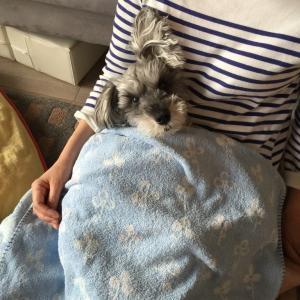 #愛犬が甘えて来るしぐさに理由がある⁈