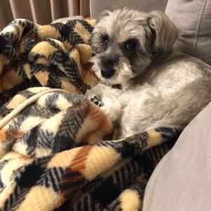 #愛犬ラブ。15回目の月命日を迎えて・・・。🌈