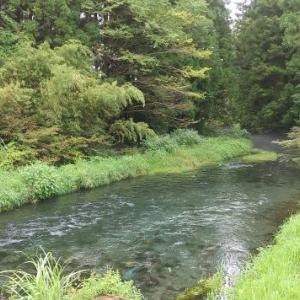 コロナ禍の休日:久しぶりの渓流釣りと血糖値