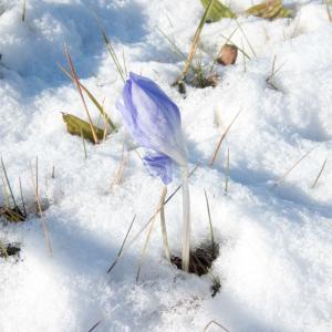 薄っすら雪景色・滝野すずらん丘陵公園