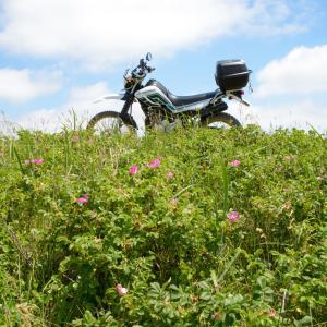 セロー 石狩浜と夏の海の花