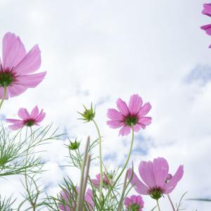 クロスカブ 夏の花と有明の滝