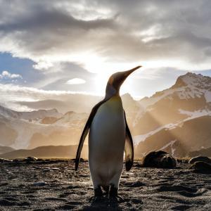 【保存版】Linuxの学習方法を初心者向けにわかりやすく解説