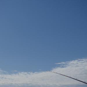 11月下旬、地磯石鯛釣り(渋いですなぁ。)