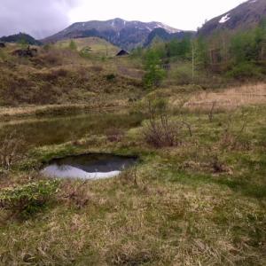 武具脱(もののぐ)池のワタスゲ