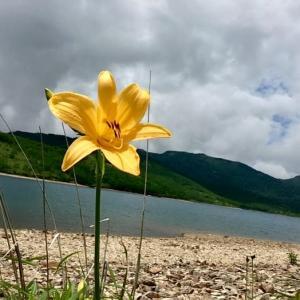 お花の野反湖ノルディックウォーキングその2