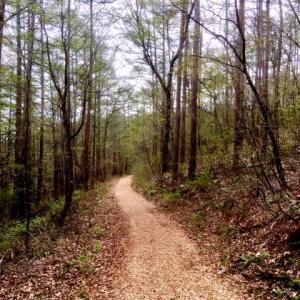 新緑の始まった森の癒し歩道