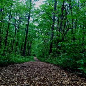 新緑の鮮やかな草津森の癒し歩道