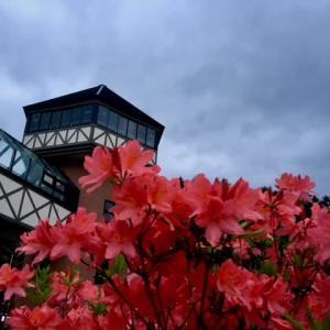 道の駅のお花続き