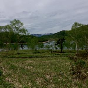 新緑の野反湖♪