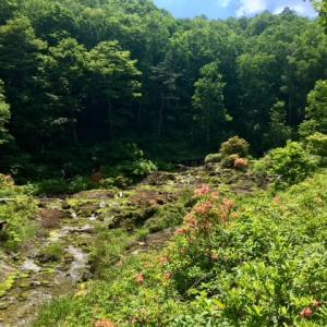 今年最初のラムサール条約登録湿地群