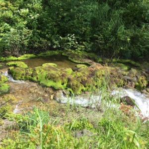 8月のチャツボミゴケ公園