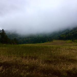 秋の芳ヶ平湿原