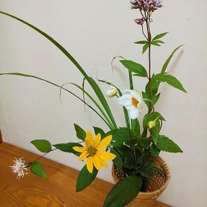 10月の茶花 秋明菊、菊芋、下野草、高野箒、縞葦