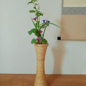 6月の茶花 蛍袋、紫露草、銭葵