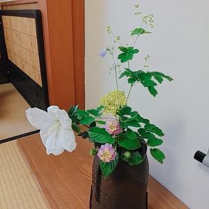 8月の茶花 木槿、女郎花、七段花、釣鐘人参、唐松草