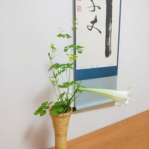 8月の茶花 高砂百合、女郎花、唐松草