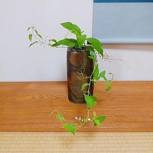 七月の茶花 備前焼花入に野の花を