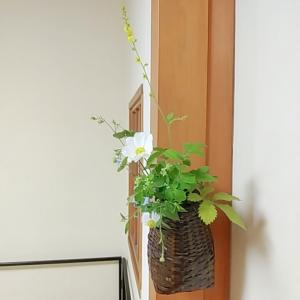 長月の茶花、五種と三種